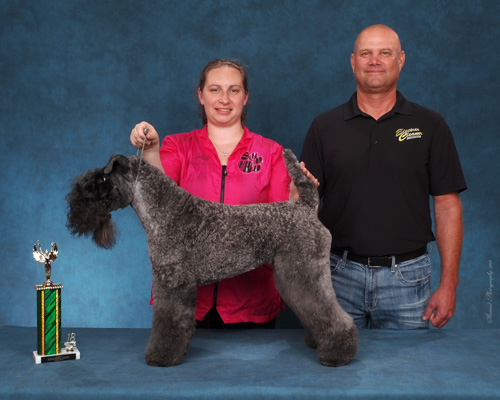 2018 Pet Quest 2nd Place All Other Pure Breeds (Kerry Blue Terrier)